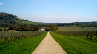 looking back towards Denbies vineyard