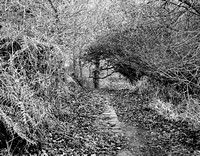 Lumsdale, near Matlock in black and white, January 2017